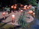 Pink Flamingos at the Audubon Zoo. The first thing you see.