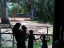 Admiring the Giraffe.